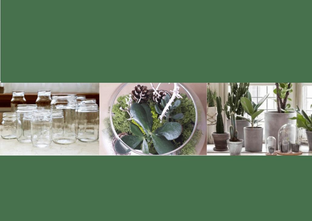 Composizione Piante Grasse In Vaso Di Vetro.Il Giardino In Una Bottiglia Di Vetro Arreda Con Sara