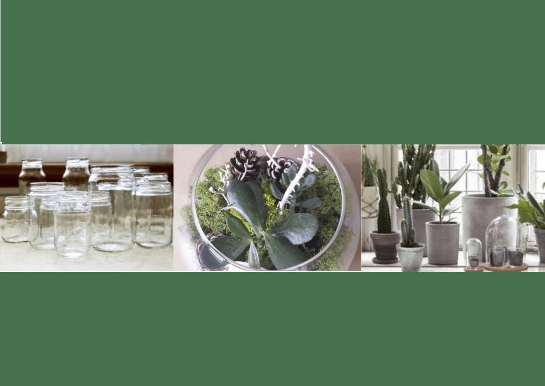 Bagnare Piante Con Bottiglie il giardino in una bottiglia di vetro | arreda con sara