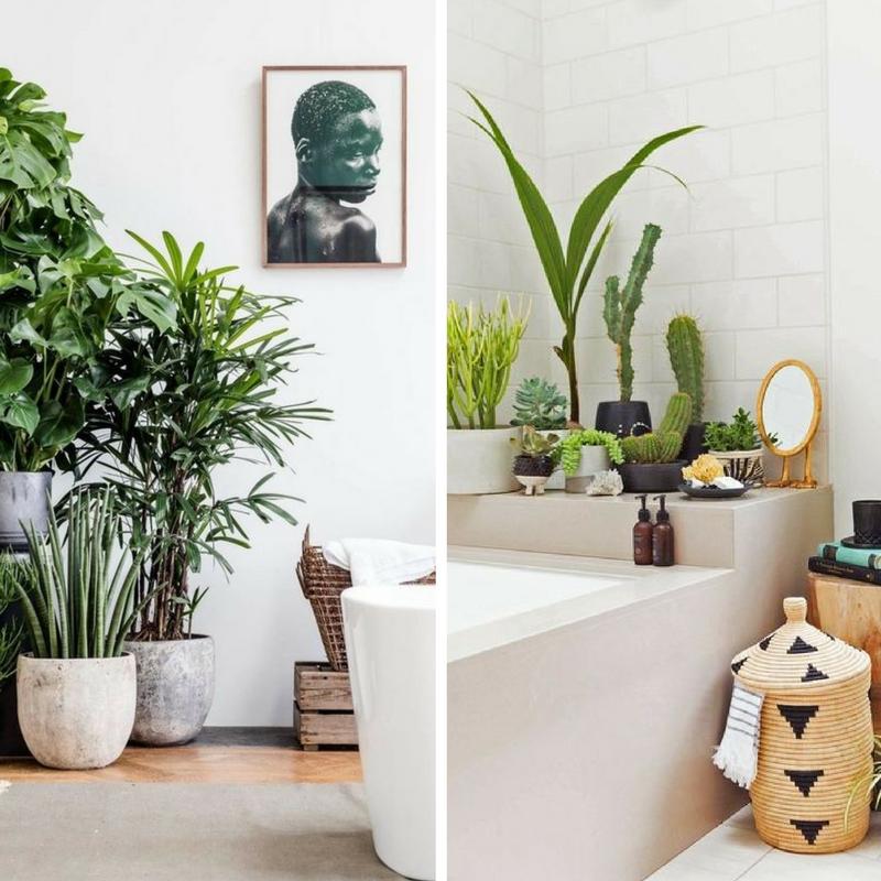 Anche il bagno vuole il suo stile stili e tendenze per - Piante per il bagno ...