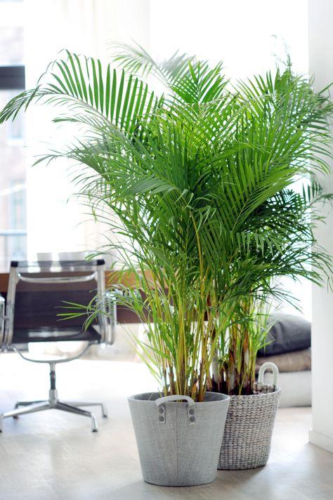 7 piante per portare la natura nel vostro ufficio arreda - Piante per ufficio ...