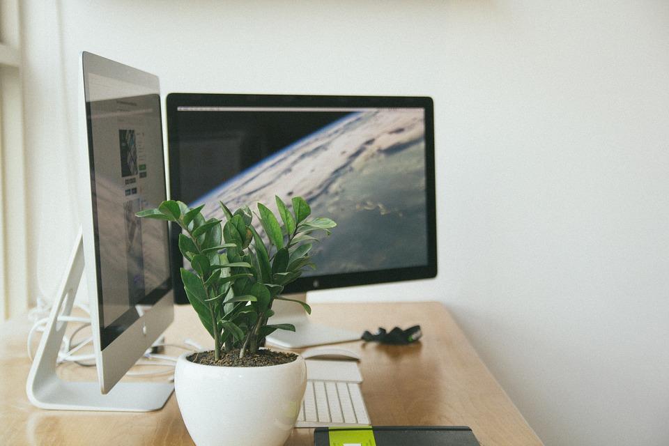 Piante Ufficio Stress : Come scegliere le piante per l ufficio come fare tutto