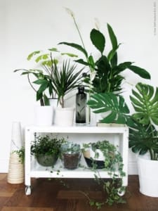 Angolo verde in casa per vivere sereni