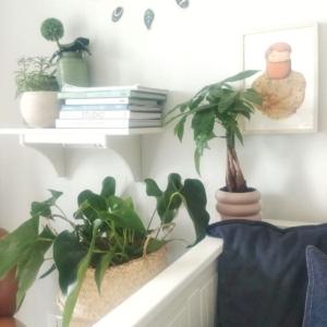 Circondati di piante per stare in mezzo alla natura